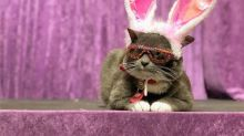 Meet Famous Instagram Cat Bagel Who Owns 600 Pairs of Sunglasses
