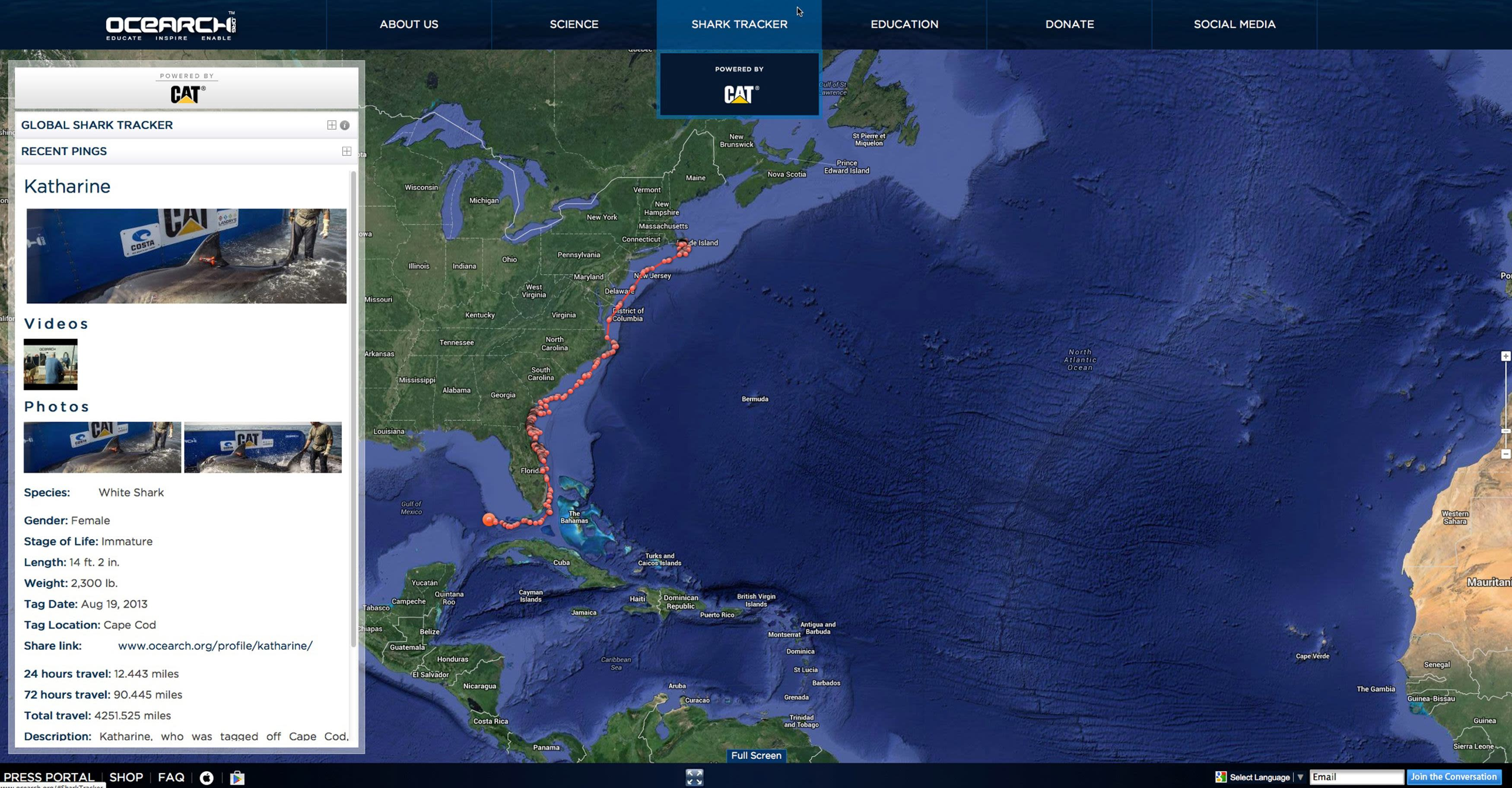 Researchers track migration of great white shark around Florida