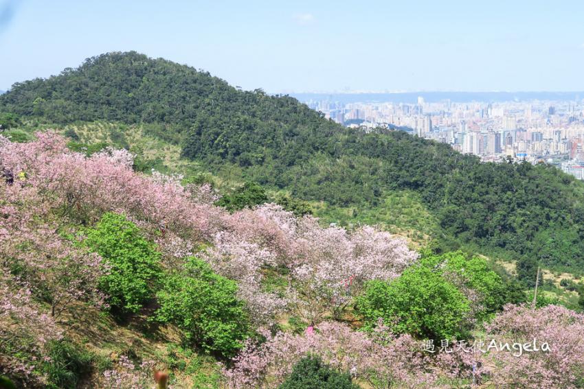 騰龍御櫻櫻花