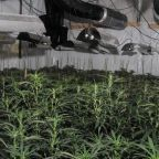 'Significant' cannabis factory discovered next to Bank of England in City of London