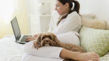 Beruhigungsvideos für Hunde sind der neue Internet-Hit