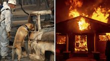 California fire death toll rises to 71 with more than 1000 still missing