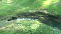 Standing water breeding ground for mosquitoes