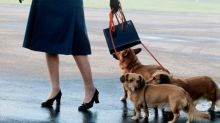 The Queen's Cutest Accessories? Her Corgis.