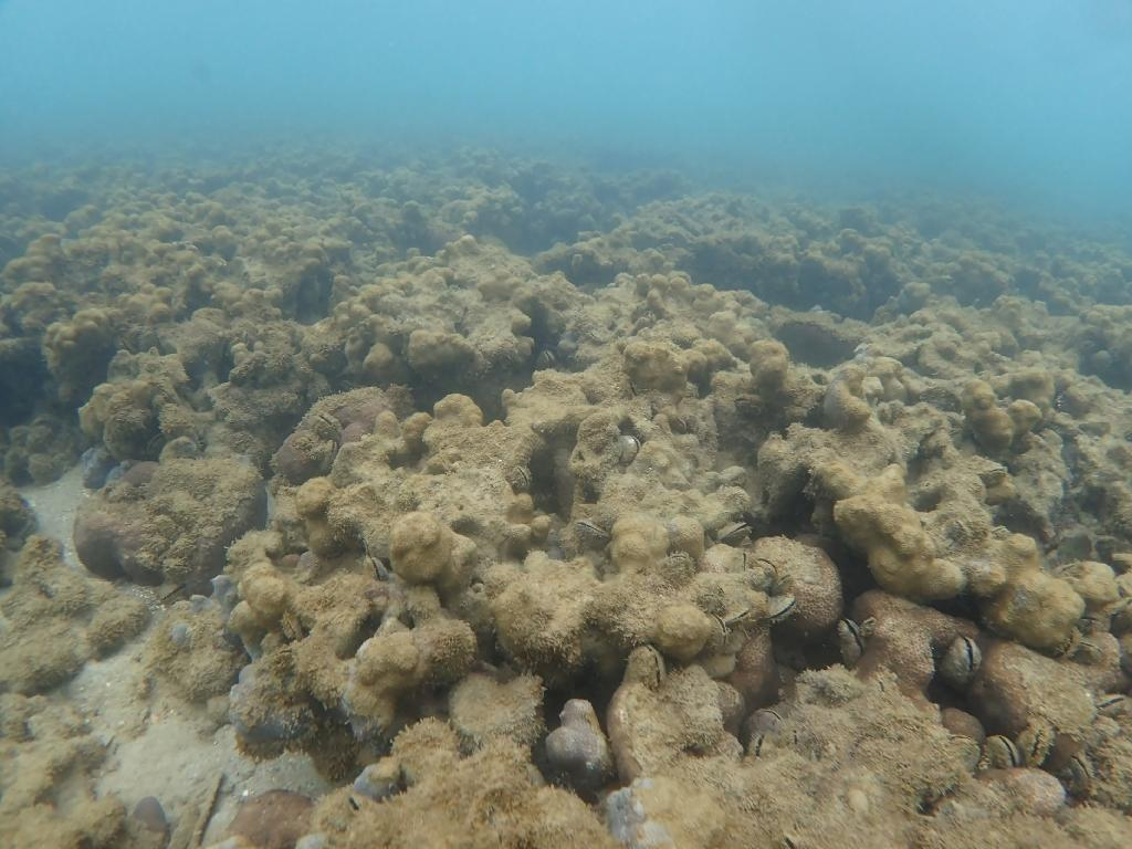Bleaching, as suffered by this reef off Japan's Ishigaki island, is just one of the problems (AFP Photo/Handout)