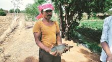 Cultivating fishes with paddy: A new recipe for farm prosperity in Maharashtra