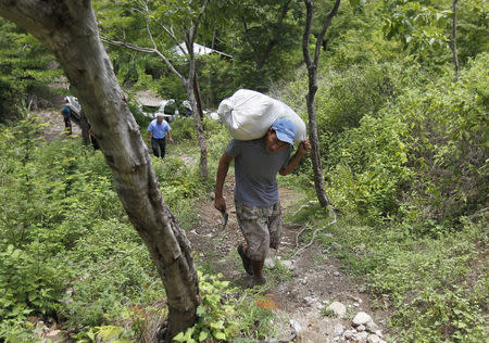 A farmer carries a bag of provision, donated by the United Nations World Food Programme (WFP) food reserves, during a distributing of food aid to families affected by the drought in the village of Orocuina, August 28, 2014. REUTERS/Jorge Cabrera