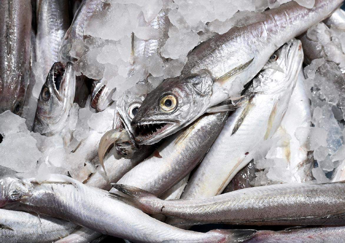 Mercury in fish could increase risk of als study finds for How much mercury is in fish