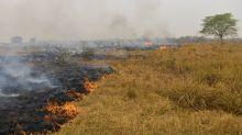 El Senado brasileño instala una Comisión Externa para los incendios en el Pantanal