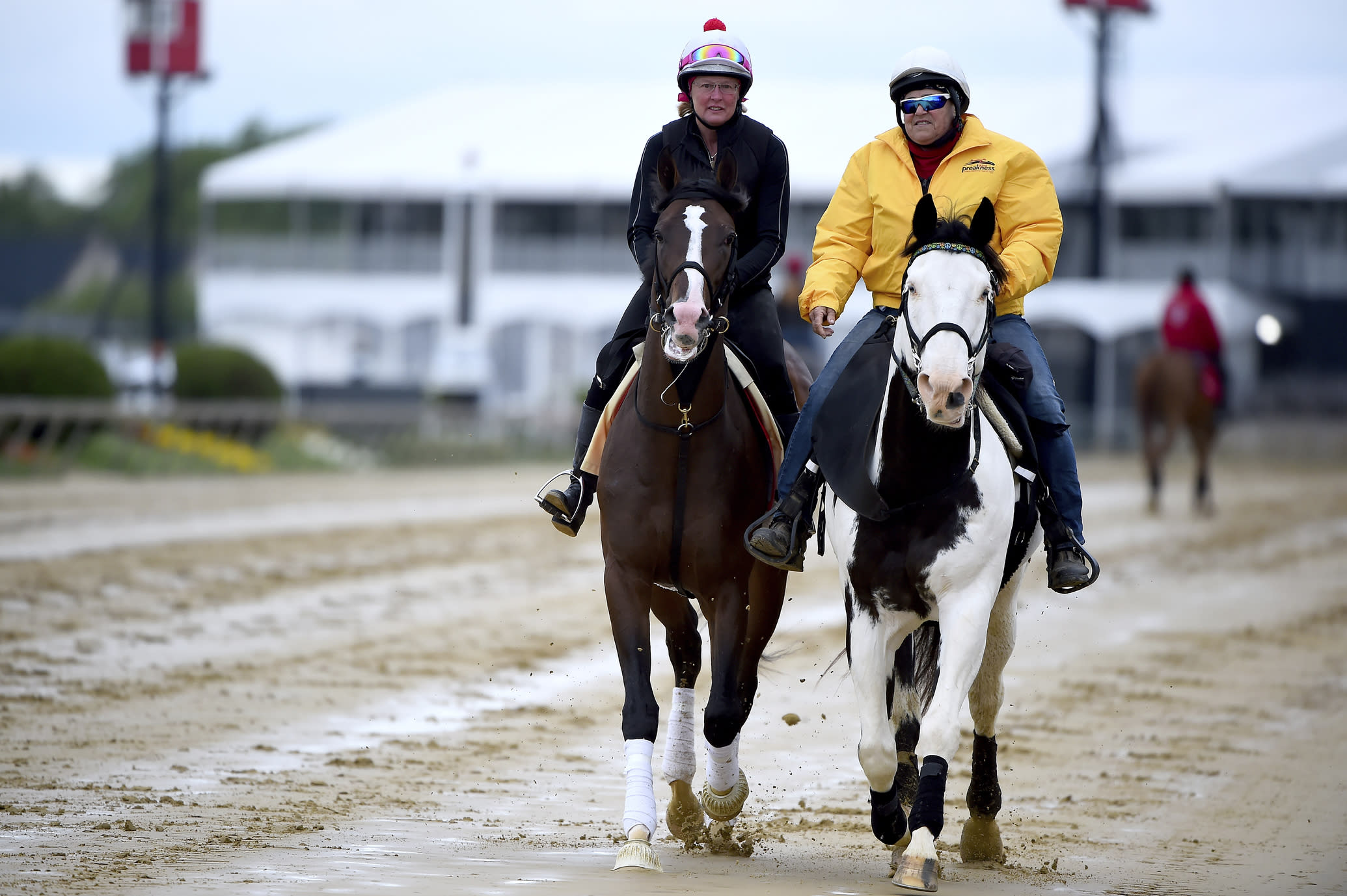 Preakness contender War of Will, left, with exercise rider Kim Carroll aboard, is led onto the track, Tuesday, May 14, 2019, at Pimlico Race Course in Baltimore. The Preakness Stakes horse race is scheduled to take place Saturday, May 18. (AP Photo/Will Newton)