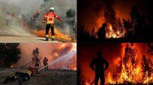 Stati Uniti, casa va a fuoco: il cane salva i padroni dall'incendio