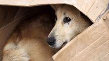 Sempre più cani avvelenati, Lndc: serve una legge ad hoc