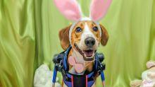 Dürfen wir vorstellen: Lieutenant Dan! Cadburys neues Werbegesicht ist ein zweibeiniger Hund