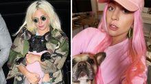 Lady Gaga offers $500K reward after dog walker shot, pets stolen