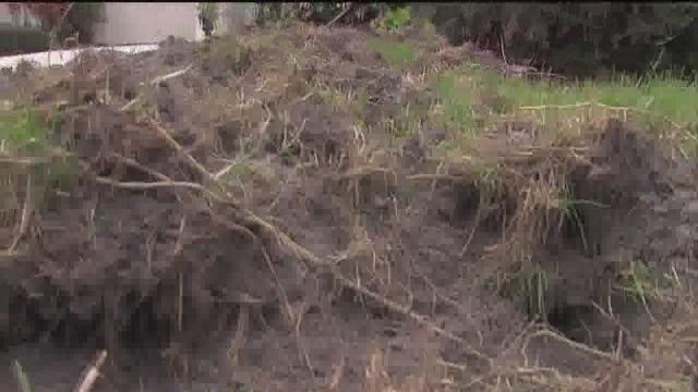Feral hogs tearing up property in Manatee County