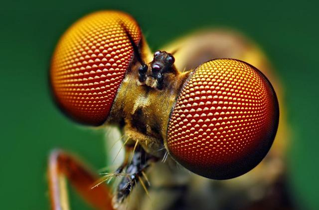 Stanford toughens up cheap solar cells by mimicking insect eyes