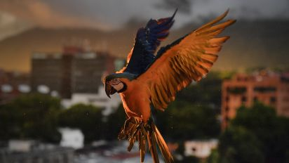 Scrimmage in Brazil welcomes unusual visitor