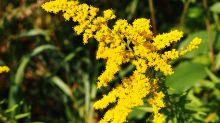 Otoño en casa: flores y plantas para decorar esta temporada tu hogar