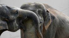 Zoo de Munique se une à semana do Orgulho Gay