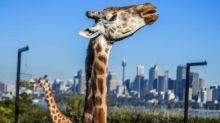 From cage to conservation: the reinvention of Australian zoos
