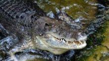 Polizei in Australien findet menschliche Überreste in Krokodil