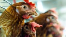 Tyson Foods' Subsidiary Inks Deal to Expand in Kazakhstan