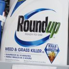 Bayer Shares Plummet Upon Verdict That Roundup Caused Man's Cancer