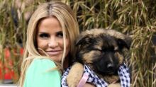 Katie Price 'spends £1000 on new puppy to take her mind off things' just a week before bankruptcy hearing