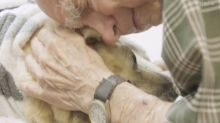 Man, 95, forced to have beloved pet put down after attack by six dogs