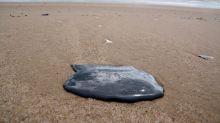 Estudo do Inpe indica que óleo que atinge litoral brasileiro veio do mar da África
