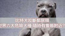 葡萄友:狗隻咬人唔係狗嘅錯 係主人嘅錯