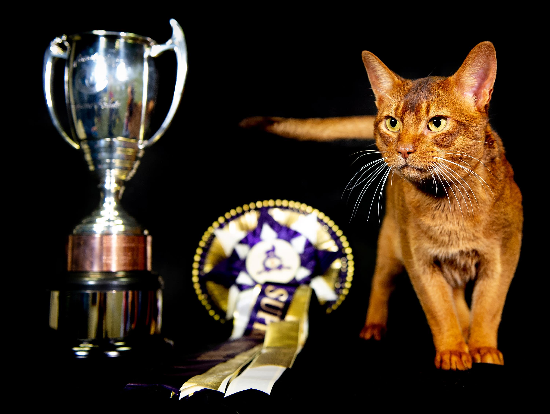 Photos: Supreme Cat Show