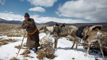 Mongolia's reindeer herders fear lost identity under hunting ban
