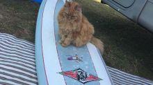 9 gatitos que adoran el surf