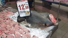 Intermarché épinglé pour avoir vendu du requin-renard, une espèce menacée