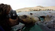 Kuss mit einem Seelöwen