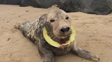 RSPCA releases heartbreaking images of seal killed by plastic