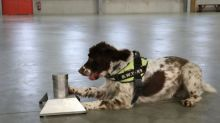 Sniffer Dog Has £25,000 Bounty Put On His Head After £6m Illegal Tobacco Find