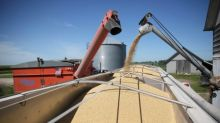 Exclusive: Pile drive - China expected to divert outstanding U.S. soybean cargoes into reserves
