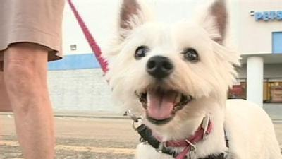 New Law Holds Pet Owners Accountable