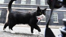 """""""Chief Mouser"""": Britische Ministeriumskatze Palmerston tritt ab"""