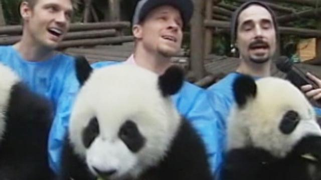 Backstreet Boys cuddle with, sing to giant pandas in China