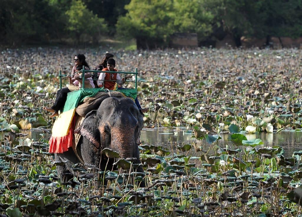 Sri Lanka elephant owners must take their elephants for daily walks of not less than 5km (AFP Photo/Ishara S.Kodikara)