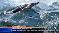 Dramatic dolphin rescue off La Jolla