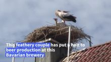 Storks force a Bavarian brewer to stop his productio