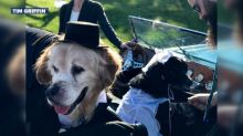 Dog with terminal cancer gets 'married' on bucket list adventure