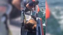 US Coast Guard Rescues Injured Sea Turtle Off Plantation Key