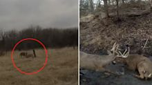 Incredible video shows brave approach to help distressed deer