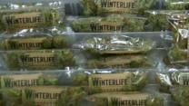 Seattle Company Delivers Highs to Customers