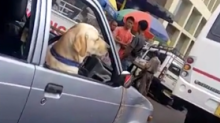 Watch: 'Local Celeb' Dog Drives Car on The Streets of Meghalaya